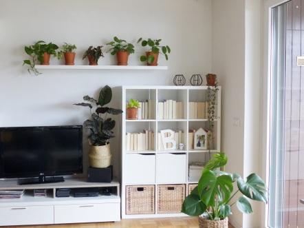 Bild01-Pflanzeneinsteiger.JPG