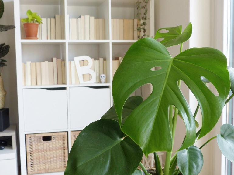 Bild02-monstera